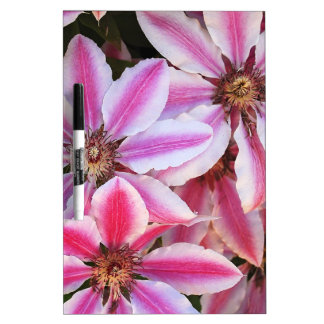 Pink and white striped clematis flowers dry erase whiteboards