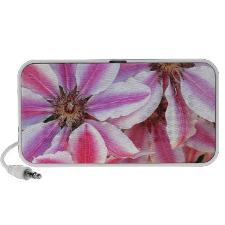 Pink and white striped clematis flowers mp3 speakers