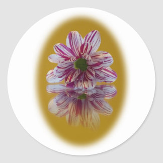 Pink and White Striped Daisy Gerbera Round Sticker