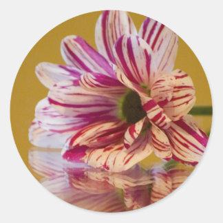 Pink and White Stripey Gerbera Flower Round Sticker