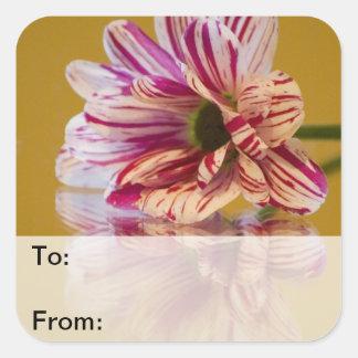 Pink and White Stripey Gerbera Flower Square Sticker