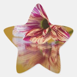 Pink and White Stripey Gerbera Flower Star Sticker