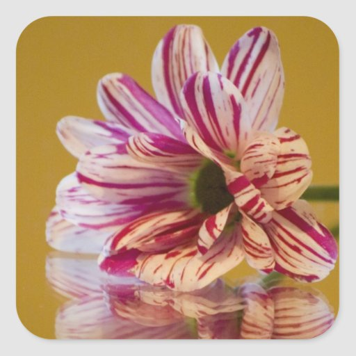 Pink and White Stripey Gerbera Flower Stickers