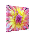 Pink and Yellow Dahlia Gallery Wrap Canvas