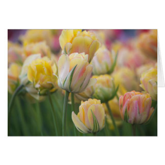 Pink and Yellow Tulips Card