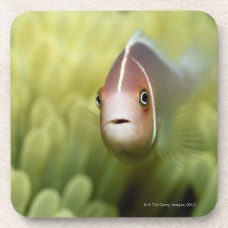 Pink Anemone Fish Coaster