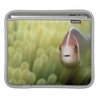 Pink Anemone Fish iPad Sleeve
