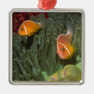 Pink Anemonefish in Magnificant Sea Anemone Christmas Ornament