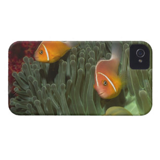 Pink Anemonefish in Magnificant Sea Anemone iPhone 4 Case