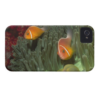 Pink Anemonefish in Magnificant Sea Anemone iPhone 4 Case-Mate Case