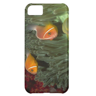 Pink Anemonefish in Magnificant Sea Anemone iPhone 5C Case
