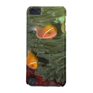 Pink Anemonefish in Magnificant Sea Anemone iPod Touch 5G Cover