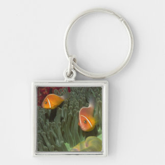 Pink Anemonefish in Magnificant Sea Anemone Silver-Colored Square Key Ring