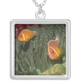 Pink Anemonefish in Magnificant Sea Anemone Silver Plated Necklace