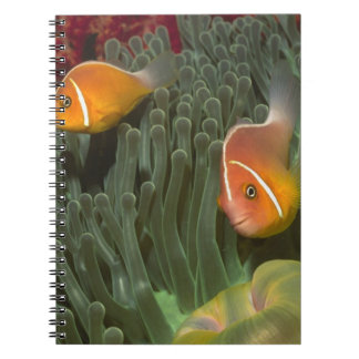 Pink Anemonefish in Magnificant Sea Anemone Spiral Notebook