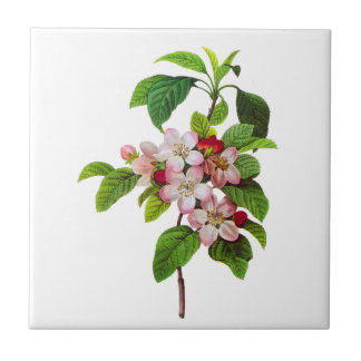 Pink Apple Blossoms by Pierre Jopseph Redoute Tile
