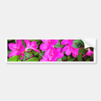Pink Azalea Blooms Bumper Sticker