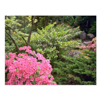 Pink Azalea Bush Amid Shrubs flowers Postcard