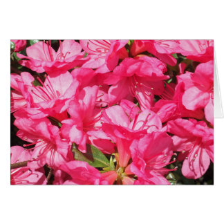 Pink Azalea Cards