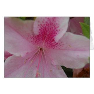 Pink Azalea Closeup Greeting Card