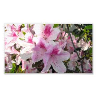 Pink Azalea Floral Color Photography Prints Photo Print