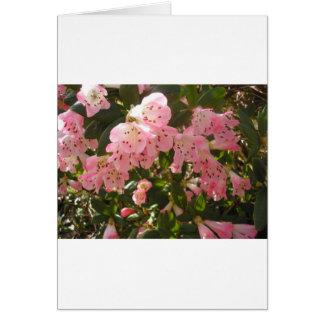 Pink Azalea Flowera Card