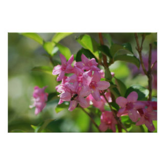 Pink azalea flowers and meaning poster
