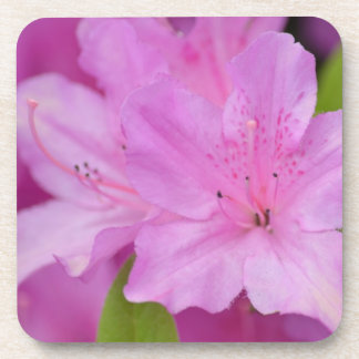 Pink Azalea Flowers Beverage Coasters