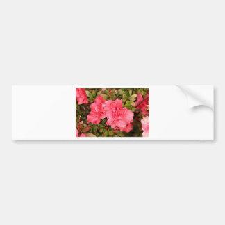 Pink azalea flowers in bloom bumper stickers