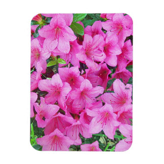 Pink Azalea Premium Magnet