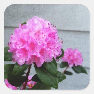 Pink Azalea Square Sticker
