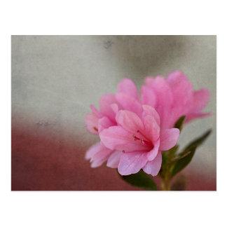 Pink Azalea Textured Postcard