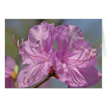 Pink Azaleas Card