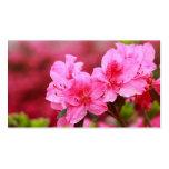 Pink Azaleas - Pocket calendar Pack Of Standard Business Cards