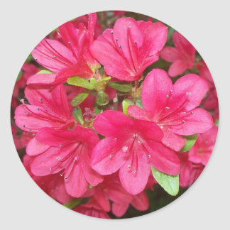 Pink Azaleas Round Sticker