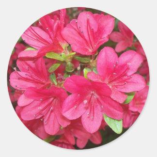Pink Azaleas Round Stickers