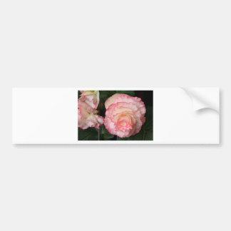 Pink begonia flower in bloom bumper stickers