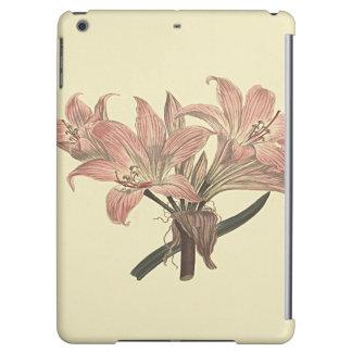 Pink Belladonna Lily Botanical Illustration