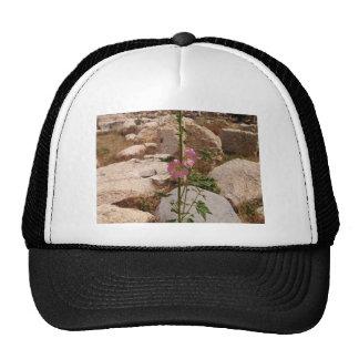 Pink Bindweed Cap