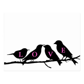 Pink Black and White Love Birds Postcard