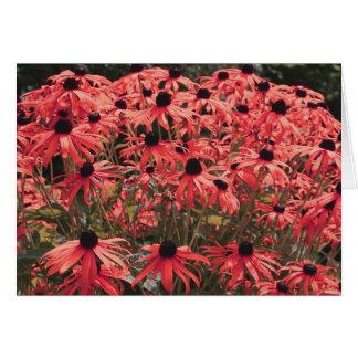 Pink Black Eyed Susan Flower Photography Card