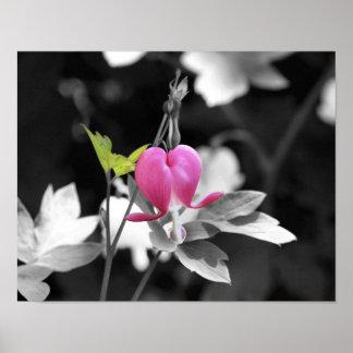 Pink Bleeding Heart Flower Black And White Poster