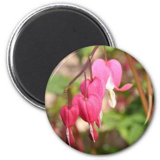 Pink Bleeding Hearts 6 Cm Round Magnet