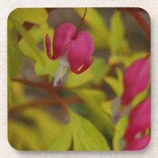 Pink bleeding hearts flower blossom floral coaster