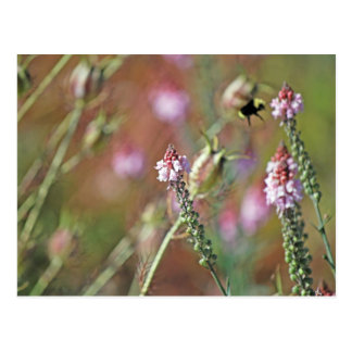 Pink Blooms and Bumble Bee Postcard