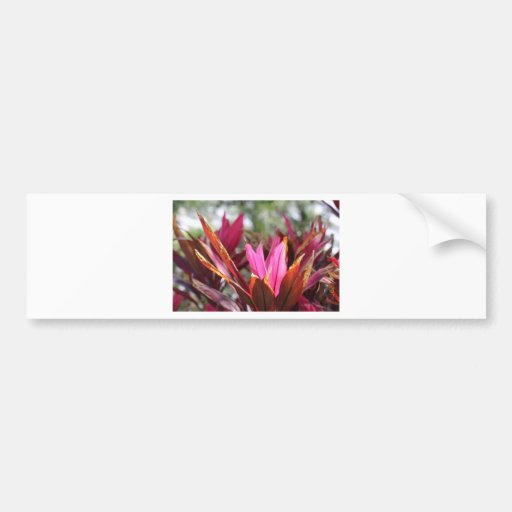pink blooms bumper stickers