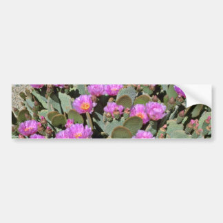 Pink Blooms On Beavertail Cactus flowers Bumper Stickers