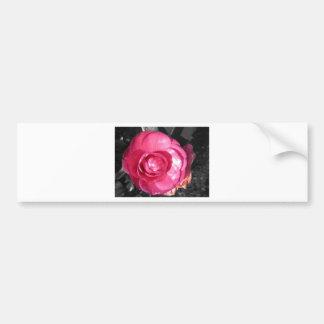 Pink Blossom Bumper Stickers