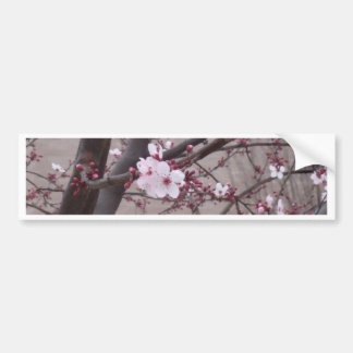 Pink Blossoms Bumper Sticker