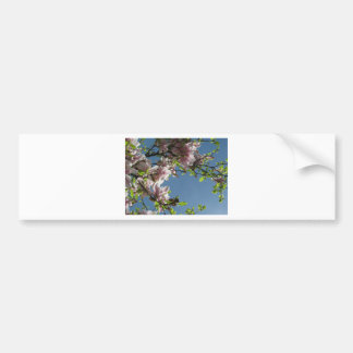 Pink Blossoms Bumper Stickers